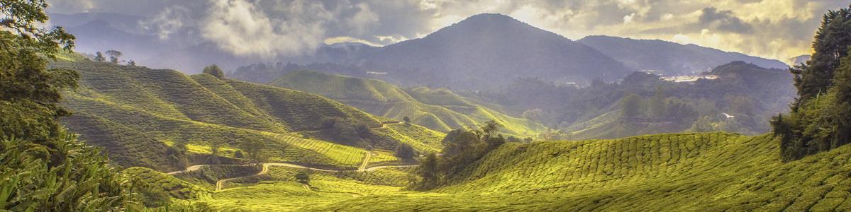 Sustainable Land Use